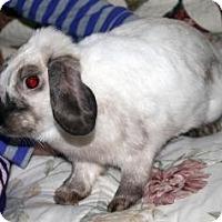 Adopt A Pet :: Ally - Maple Shade, NJ
