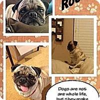 Adopt A Pet :: Rocky 4 - Walled Lake, MI