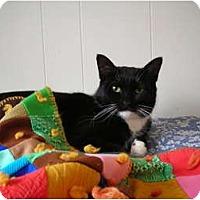 Adopt A Pet :: Lolita - Putnam Valley, NY