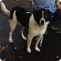 Adopt A Pet :: What Not - Dandridge, TN