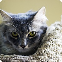 Adopt A Pet :: Nermal - Chicago, IL