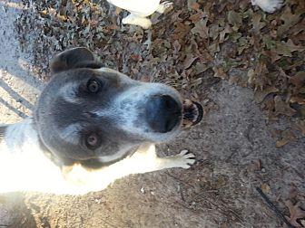 Anatolian Shepherd Mix Dog for adoption in Ardmore, Oklahoma - Pickles