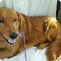 Adopt A Pet :: Rusty - Foster, RI