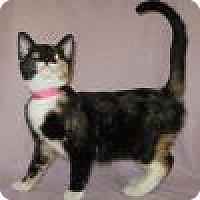 Adopt A Pet :: Alexa - Powell, OH