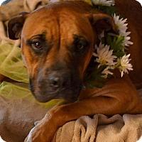 Adopt A Pet :: Mandy - Okeechobee, FL