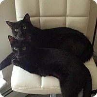 Adopt A Pet :: Hudson and Brooke - St. Paul, MN