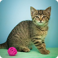 Adopt A Pet :: RoseMary - Circleville, OH