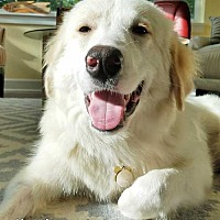 Adopt A Pet :: Lily in FL - new! - Beacon, NY