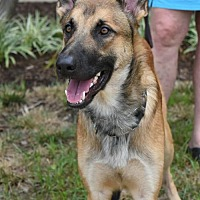 Adopt A Pet :: Stark - Greensboro, NC