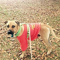 Adopt A Pet :: Willie - Sterling Heights, MI