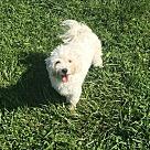 Adopt A Pet :: Richard