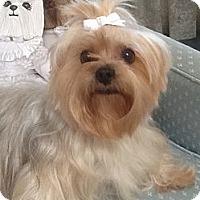 Adopt A Pet :: Callie - Orange, CA