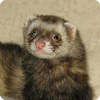 Adopt A Pet :: Teddy - South Hadley, MA