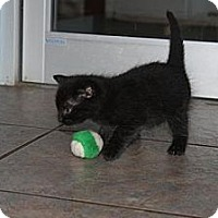 Adopt A Pet :: Simon - Stilwell, OK