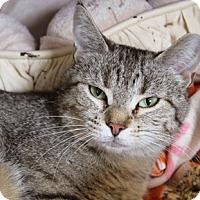 Adopt A Pet :: Looper - Chicago, IL