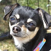 Adopt A Pet :: Jackie - Meridian, ID