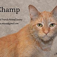 Adopt A Pet :: Champ - Ortonville, MI