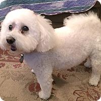 Adopt A Pet :: Samantha - East Hanover, NJ