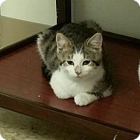 Adopt A Pet :: Turkey - Medina, OH