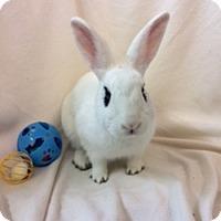 Adopt A Pet :: Norbit - Paramount, CA