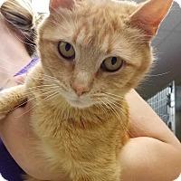 Adopt A Pet :: Jaina - Aurora, CO