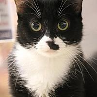 Adopt A Pet :: Bonnie - Dallas, TX