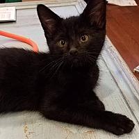 Adopt A Pet :: Pompano - LaGrange Park, IL