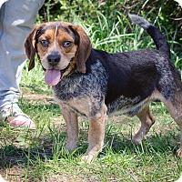 Adopt A Pet :: Tracker - Bristol, TN