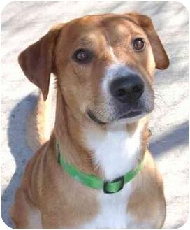 Retriever (Unknown Type) Mix Dog for adoption in Phoenix, Oregon - Chance