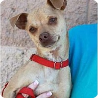 Chihuahua Mix Dog for adoption in Palmdale, California - Rocky