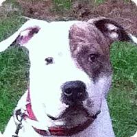 Adopt A Pet :: Max CP - Dayton, OH