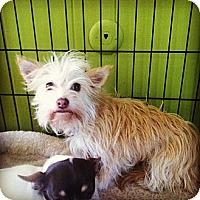 Adopt A Pet :: Poppit - Providence, RI