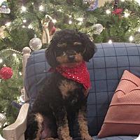 Adopt A Pet :: **STUART** - Stockton, CA