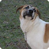 Adopt A Pet :: DICKENS - ADOPTION PENDING - Sudbury, MA