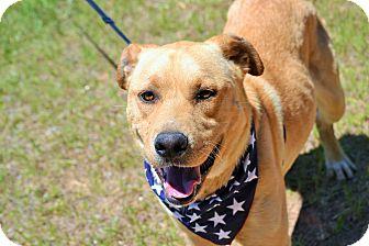 Labrador Retriever Mix Dog for adoption in Hazlehurst, Georgia - Pete