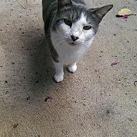 Adopt A Pet :: Elder - Naples, FL