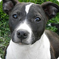 Adopt A Pet :: Wade - Davison, MI
