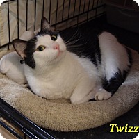 Adopt A Pet :: Twizzler - Chisholm, MN