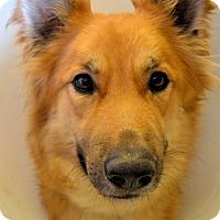 Adopt A Pet :: Bonnie - Fort Riley, KS