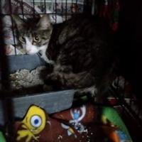 Adopt A Pet :: Marnie Yesensky - Oswego, NY