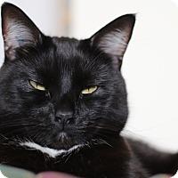 Adopt A Pet :: Hamlet - Vancouver, BC