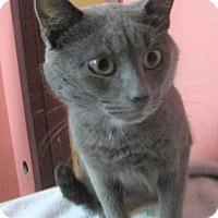 Adopt A Pet :: Ricky - Reeds Spring, MO