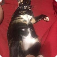 Adopt A Pet :: Pepper - Miami Shores, FL