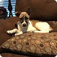 Adopt A Pet :: Everest - Richmond, VA