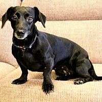 Adopt A Pet :: Chelsea - Las Vegas, NV