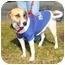 Photo 3 - Foxhound Mix Dog for adoption in Richmond, Virginia - Sweet Pea
