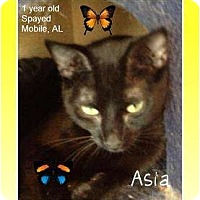 Adopt A Pet :: Asia - Mobile, AL