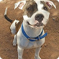 Adopt A Pet :: Pippa - Phoenix, AZ