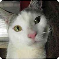 Adopt A Pet :: Sugar - Jenkintown, PA