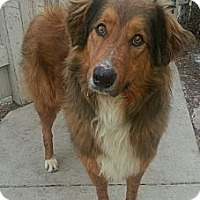 Adopt A Pet :: Romeo(ADOPTED!) - Chicago, IL